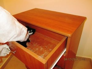 Mold Remediation During