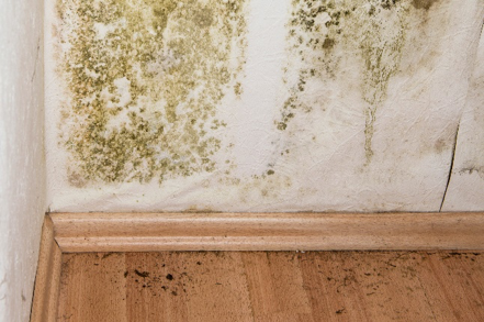 Mold – The 10 Things you need to Know